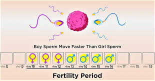 Ovulation Calculator | Fertility Calendar - Know Your Fertile Days