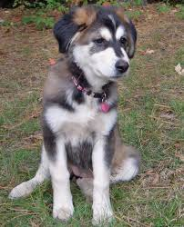 koda the mixed breed pictures 154963