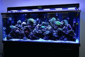 led reef aquarium lighting guide lights choose fish beginner