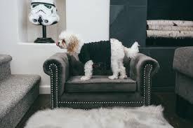 stylish velvet dog bed doug the dog s couch