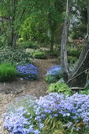 Small Picture Best 25 Woodland garden ideas on Pinterest Forest garden