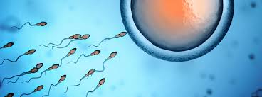 Image result for sperms evaluate eggy