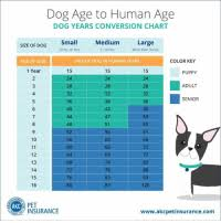 Dog To Human Years Conversion Chart Dog Age To Human Age Dog Years Conversion Chart Medium 21 50