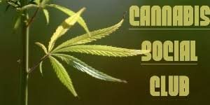Image result for marijuana social club