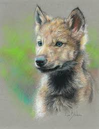 baby wolf drawing.  Wolf Wolf Drawing  Study Baby By Lucie Bilodeau On D