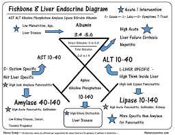 images about my future career on pinterest   nurse    this is the eighth of my series explaining the liver endocrin fishbone diagram   the alt