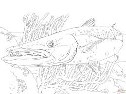 Small Picture Coloring Pages Barracuda Fish Coloring Page Free Printable
