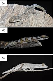Urban Gecko Design Reduced Competition May Allow Generalist Species To Benefit