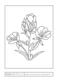 マツヨイグサ主線グレー夏の花無料塗り絵イラストぬりえプリント