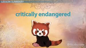 Raccoon Classification Chart Endangered Animals In India Lesson For Kids