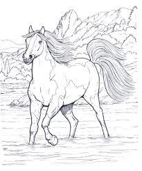 Cavallo 12 Disegni Da Colorare Per Adulti Con Disegni A Matita Di