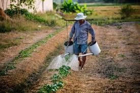 7 естественных <b>инсектицидов</b> для мелких фермеров, которые ...