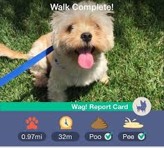 best wag pups images dog walking pup and puppies wag the dog walking app