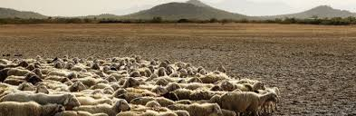 desertification effects causes and examples top list animals desertification