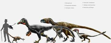 Velociraptor Size Chart Evolvosaur November 2015