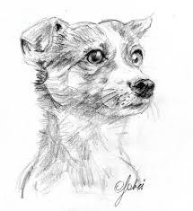 Schizzo A Matita Del Cane Di Rebecca Charcoal Sketches Schizzi
