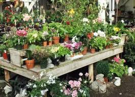 an abun of plants of all varieties fill the ballek s garden center greenhouse in east haddam