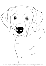 lab dog drawing easy. Exellent Dog How To Draw A Labrador Face For Lab Dog Drawing Easy I