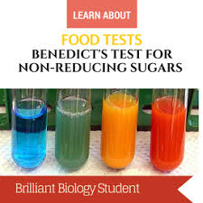 Iki Solution Iodine Test For Starch Brilliant Biology Student