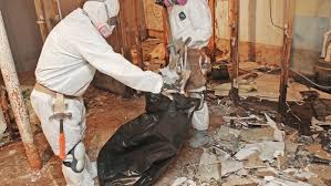 Mold Removal and Remediation | Angie's List