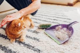 man cleans dirty rug puts fur