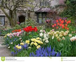 Flower  flowers front yard ...