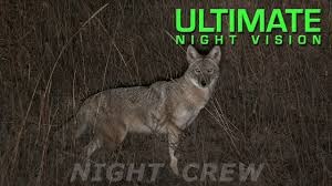 Coyote Hunting At Night With Red Light Coyote Hunting At Night Tips On How To Hunt Coyotes At
