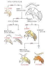 セミ の 抜け殻 種類