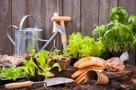 10 easy vegetable gardening s