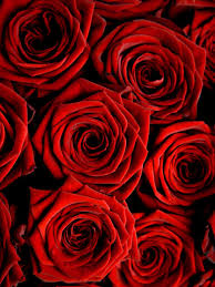 Awesome Red Rose Wallpaper iPhone ...
