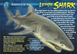 lemon shark wierd n wild creatures wiki fandom powered by wikia front lemon shark front
