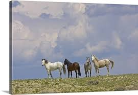 wild horses and building storm clouds wyoming canvas on wild horses wall art with wild horses and building storm clouds wyoming wall art canvas