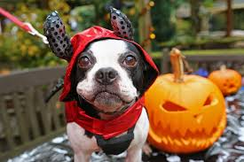 Image result for pics of halloween