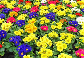bedding plants in the running for