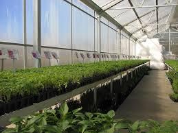 file tomato plants jpg