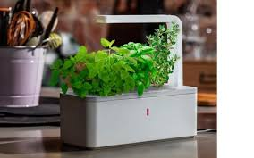 Click And Grow   Low Maintenance Indoor Vegetable Herb With  Garden Kit Greenfain