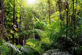 jungle background. Modren Jungle Jungle Background Krabi Thailand Stock Photo  44497514 Throughout Background L