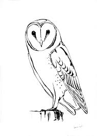 Small Picture Top 88 Barn Owl Clip Art Free Clipart Spot