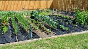 Kitchen Gardening Tips Spring Vegetable Gardening In April With Crazy Texas Weather Youtube