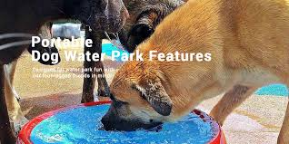 dog water park features for your portable dog splash pad