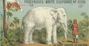 white elephant. How The Arrival Of White Elephant Started Debate Around Race In Century America Throughout
