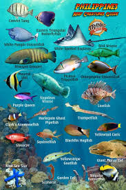 Philippines Reef Creatures Guide Franko Maps Laminated Fish