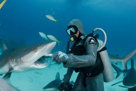 christina zenato sharks love story red bull feeding sharks is part of cristina s job