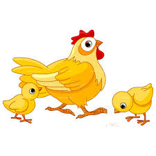 chicken clipart. Unique Chicken Chicken Clipart Cute Chicken Clip Art Photo Png Vector And Clipart