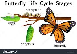Butterfly Life Cycle Stages Illustration Stock