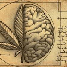 Image result for endocannabinoid