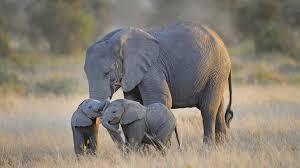 Pastel Cute Elephant Wallpaper Hd ...