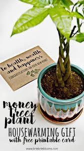 money tree plan housewarming gift