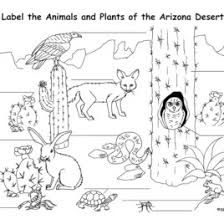 Small Picture Desert Animals Deserts And Coloring Pages On Pinterest Coloring