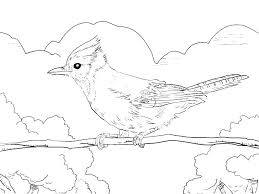 Eastern Bluebird Coloring Page And Fast Flying Dove Coloring Page
